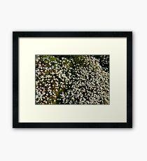 Irish Moss Framed Print