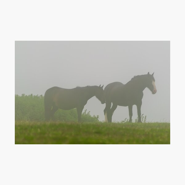 Horses in the Fog Photographic Print