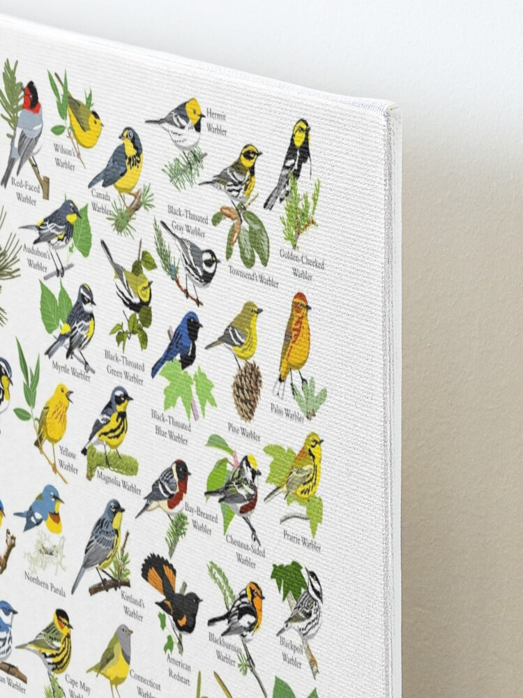 Alternate view of Warblers of the United States Mounted Print