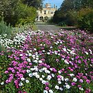 Old Government House * Sydney Botanic Gardens by Gary Kelly