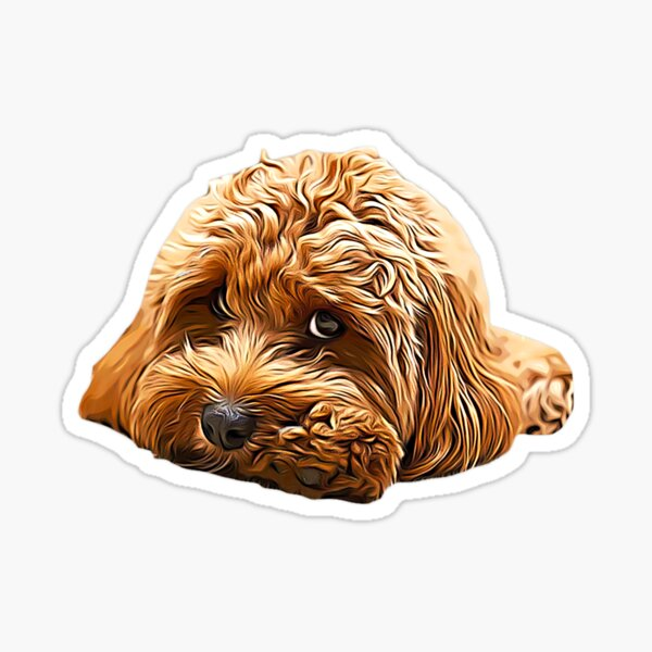 Cavapoo Cavoodle Cockerpoo Puppy Designer Dog Poodle Mix Sticker