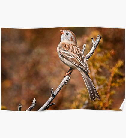 Field Sparrow Poster