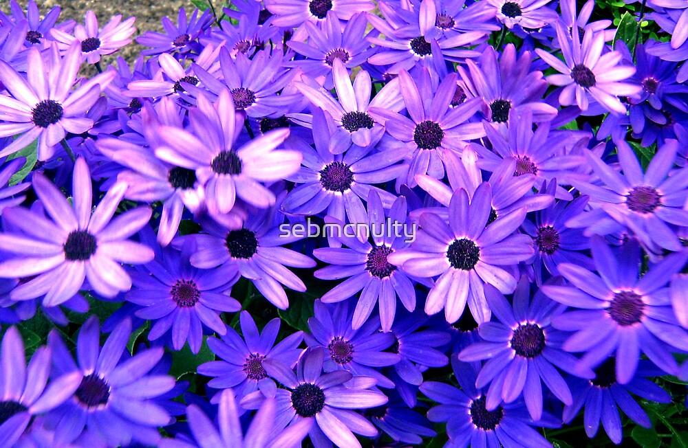 Purple flowers by sebmcnulty