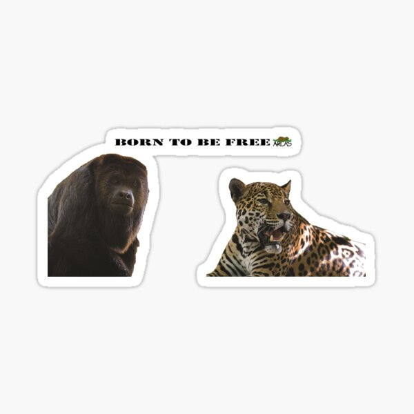 Born to be free jaguar and monkey Sticker