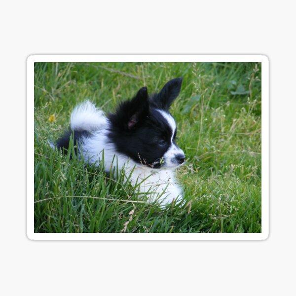 Papillon Pup Sticker