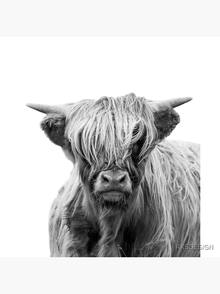 Highland Cow  by RKSDESIGN