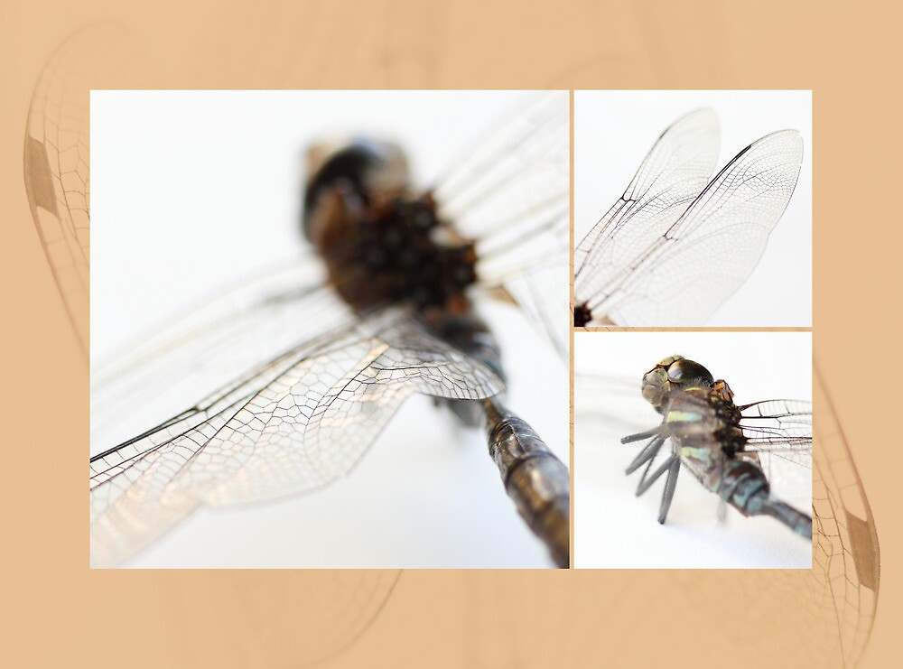 Dragonfly by Tracy Friesen
