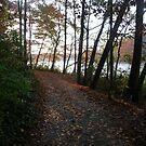 Lake path by nealbarnett