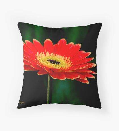 STRIKING AND VIBRANT IN SIMPLICITY - THE GERBERA Throw Pillow