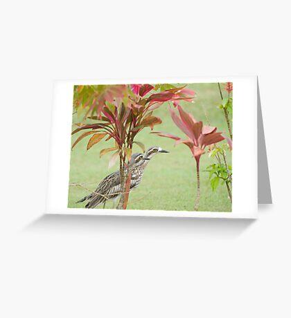 Peeking Out Greeting Card