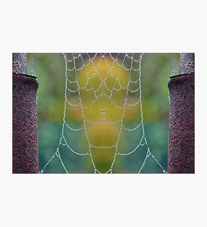 Mirrored Dew Drops Photographic Print