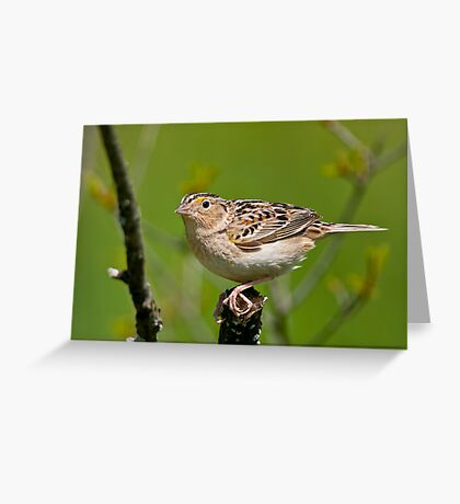 Grasshopper Sparrow Greeting Card