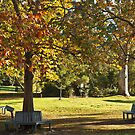 Autumn Benches  by pennyswork