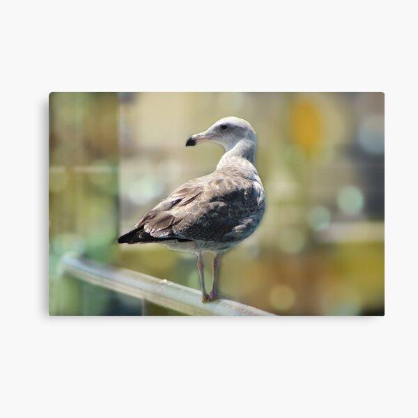 Sea Gull on Rail Canvas Print