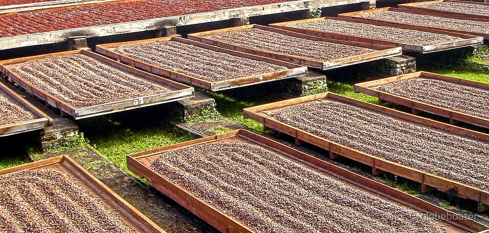 Drying Cocoa beans by globeboater