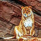 Golden Lion by FelipeLodi