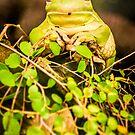 Mr.Frog by FelipeLodi