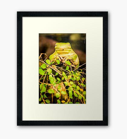 Mr.Frog Framed Print