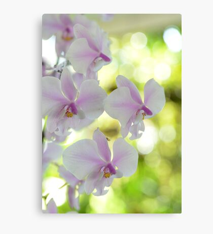 Highlights - orchid flower Canvas Print