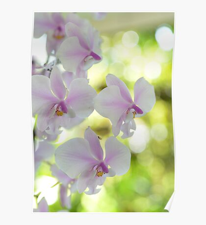 Highlights - orchid flower Poster