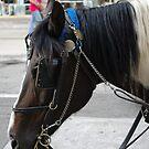"""Festis"" The Horse by Diamond Jackson"