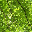 Just Green by Diamond Jackson
