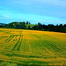 A Bit of Country Side with shining yellow mustered field by Arvind Singh