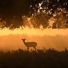 Morning in Bushy Park by Kasia Nowak