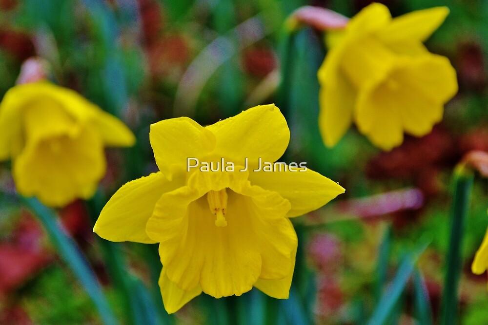 Daffodils by Paula J James