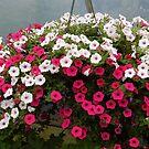Flower Bakset by WildestArt