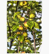 Apples For Wildlife Poster