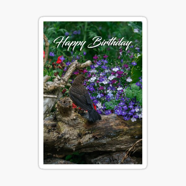 A blackbird on a log greeting card Sticker