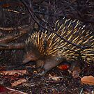 Echidna by Bami