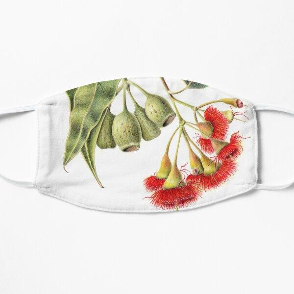 Corymbia ficifolia - Red Flowering Gum Flat Mask