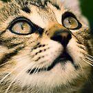 Cat eyes by jordygraph
