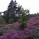 Moorland,Ziepbeekvalley,Lanaken. by alaskaman53