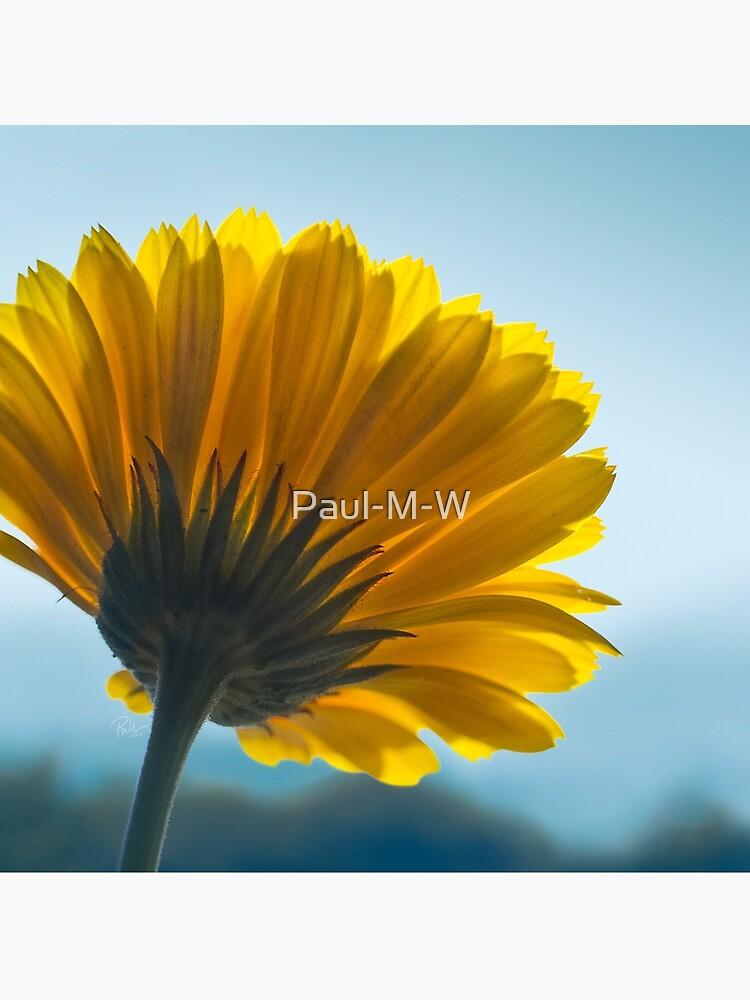 I Can't Look, Calendula Flower Print, Cushion, Card, Mug by Paul-M-W