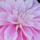 Dahlia petals by bubblehex08