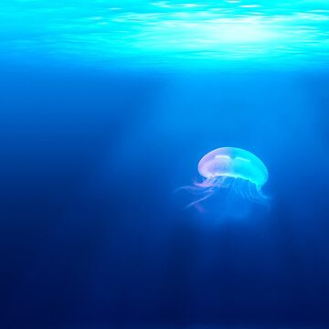 Jellyfish are beautiful de Orce