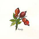 Rosehips by Sam Burchell