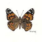Painted Lady butterfly by Sam Burchell