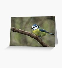 Thoughtful Blue Tit Greeting Card