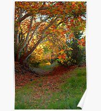 Fall At Beaver Creek Poster
