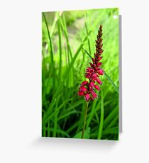 Lonely Red Flower Greeting Card