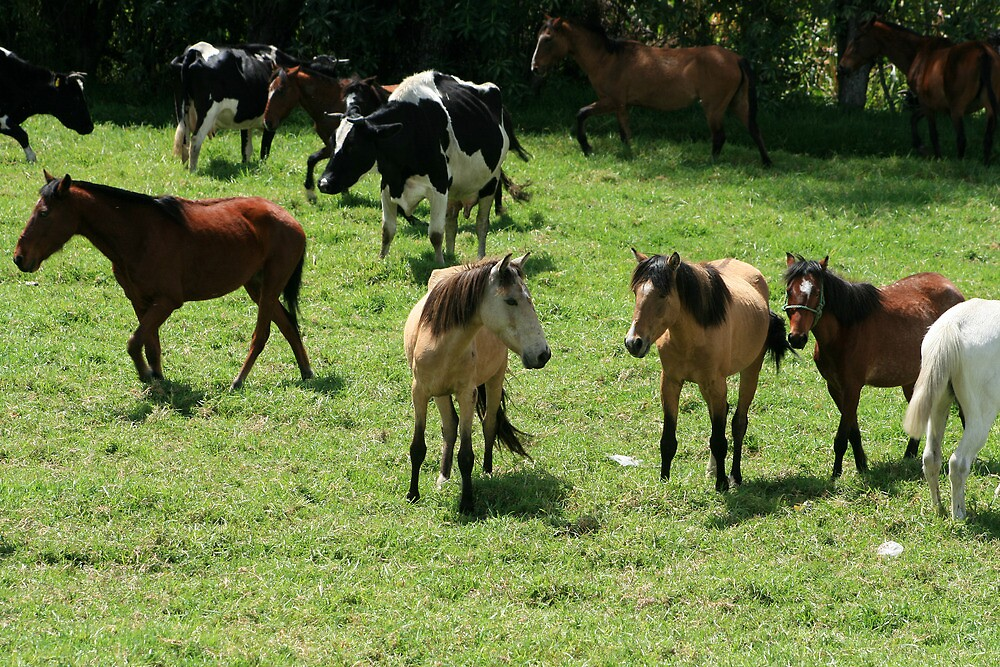Cows and Horses in a Pasture by rhamm