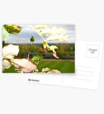 Buds of Spring Postcards