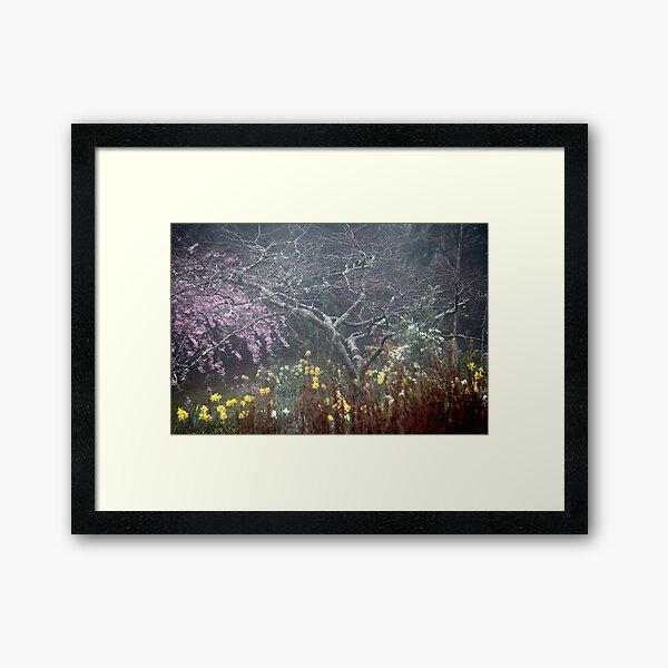Misty Spring Garden Framed Art Print