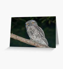 Tawny Frogmouth - Podargus strigoides Greeting Card