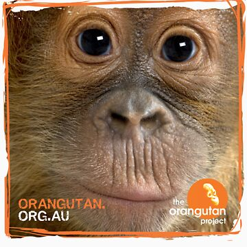 Orangutan Eyes - Windows to their Soul by Orangutan