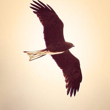 Black falcon beauty by hartlandangel